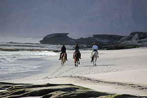 Horse riding on the beach near De Kelders South Africa