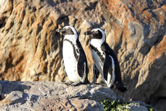 African Penguin & Seabird Sanctuary Gansbaai